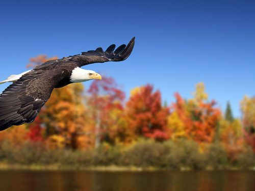 Fall birdwatching in Vilas County