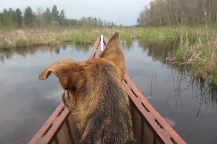 Canoeing on White Fish Lake