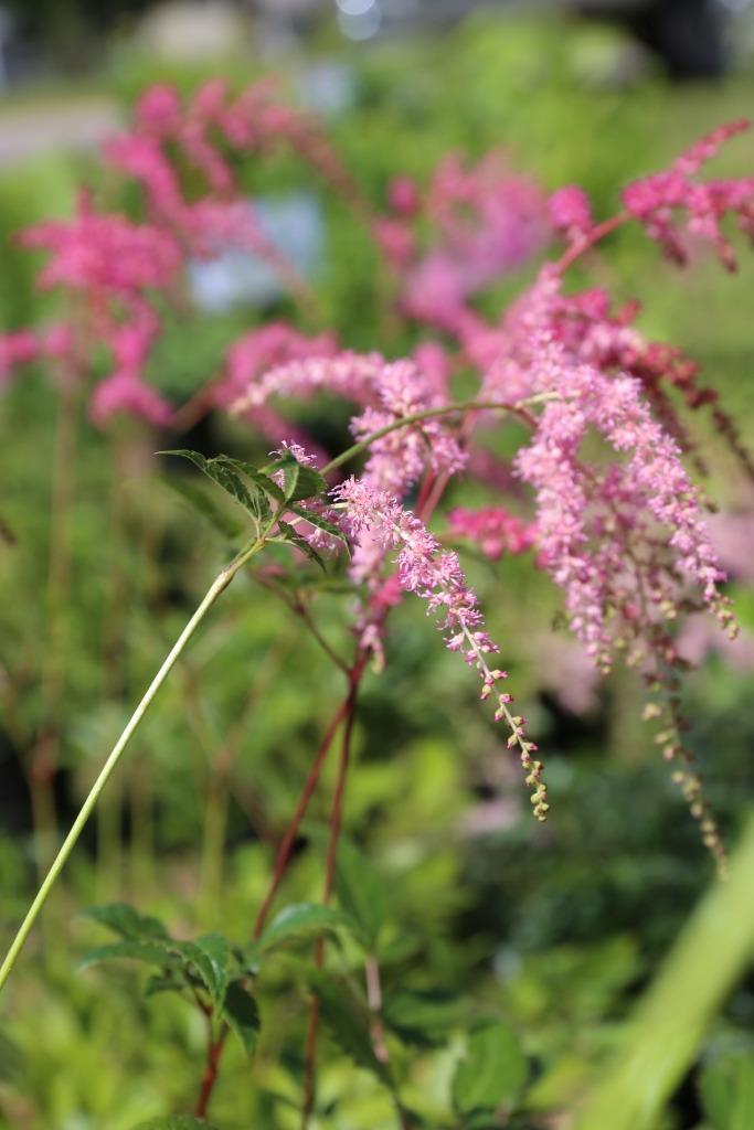 Spring Wildflower Walks Vilas County Wisconsin