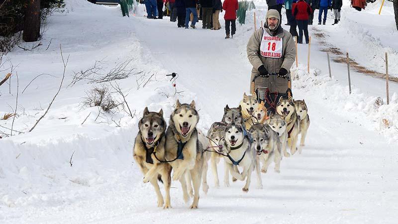 Landolakes Three Bear Sled Dog Races