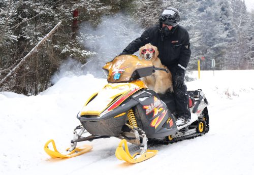Vilas County Dog Snowmobiling 2018