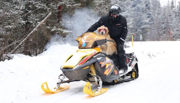 Vilas County Dog Snowmobiling 2018