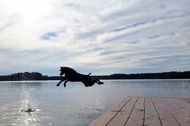 Dog Jumping In Lake