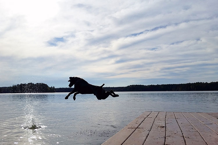 Dog Jumping In Lake