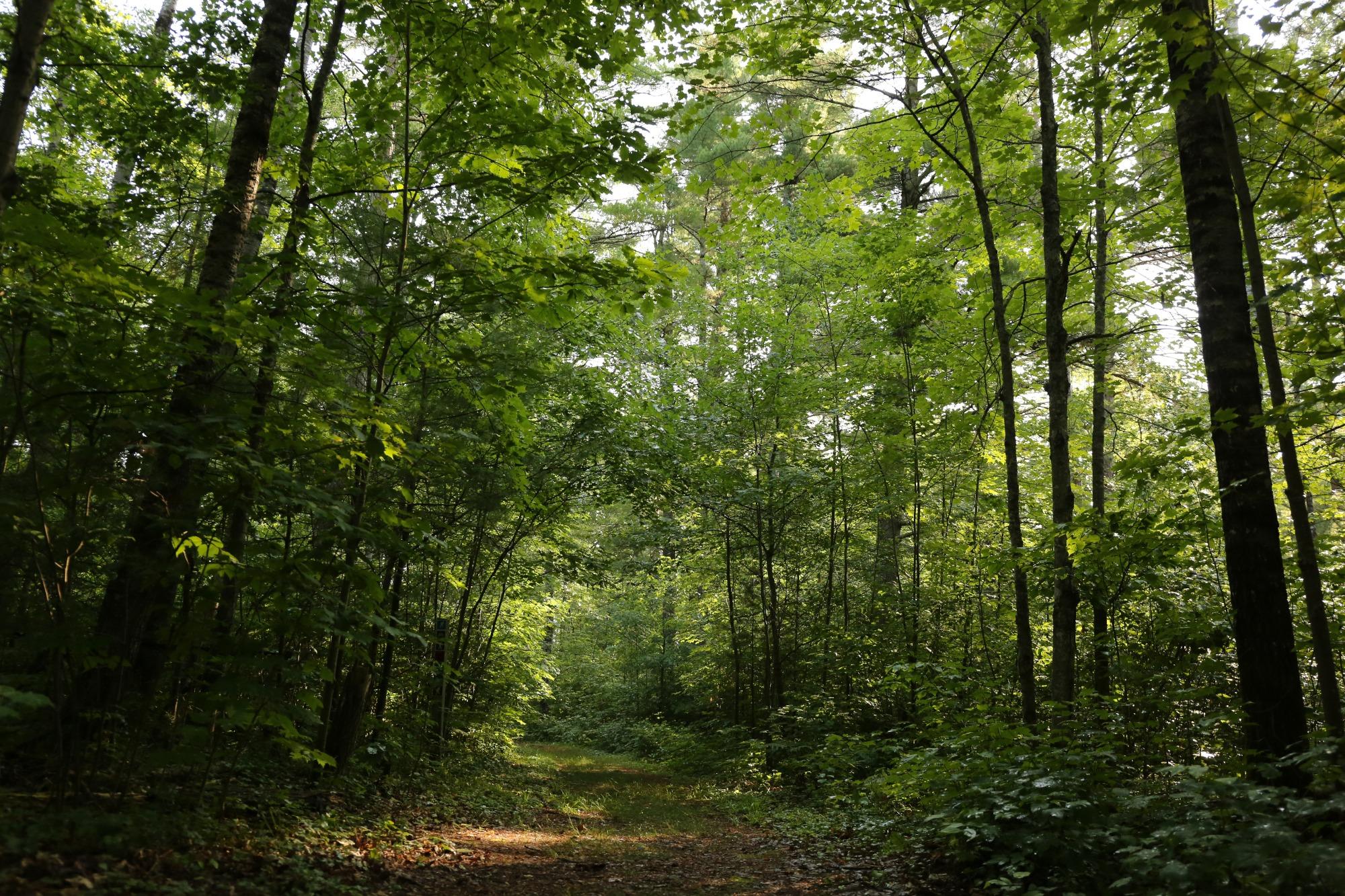 lumberjack trail vilas county wisconsin