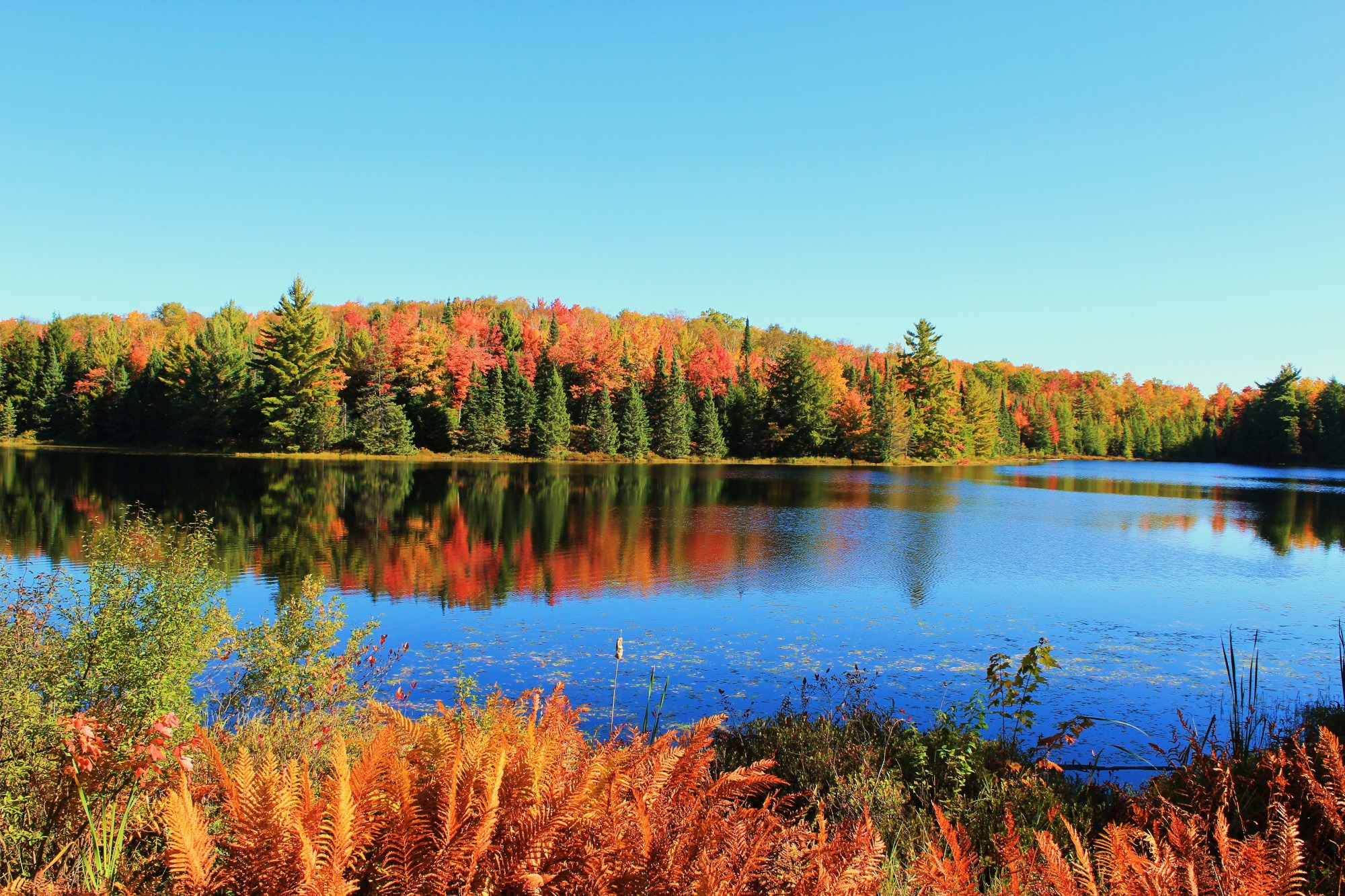 fall color on vilas county lake