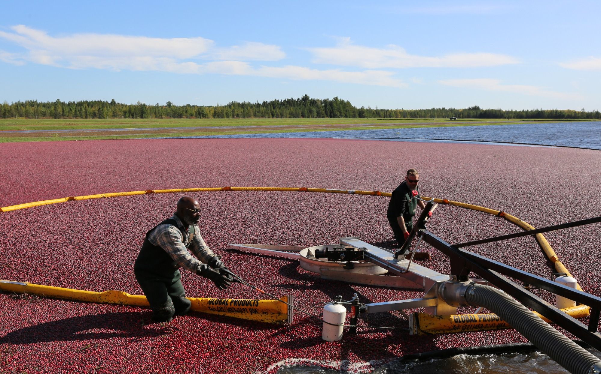 Cranberry Harvest Tour At Lake Nokomis Cranberries Vilas County Wisconsin