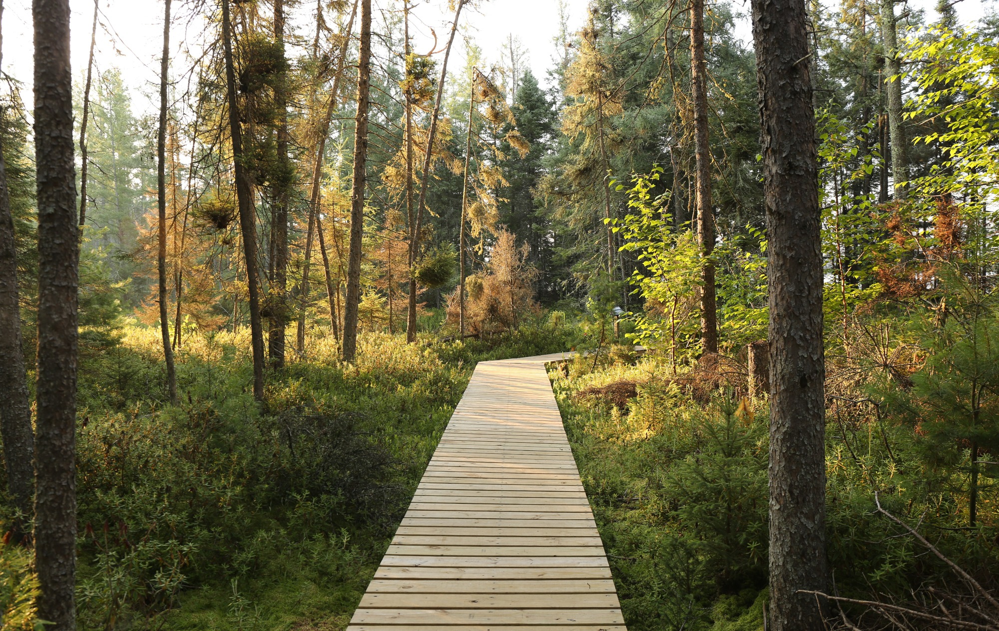 Star Lake Nature Trail Vilas County Wisconsin