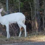white deer vilas county wisconsin