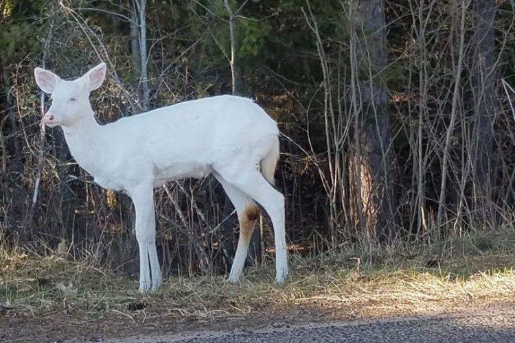 white deer vilas county wisconsin