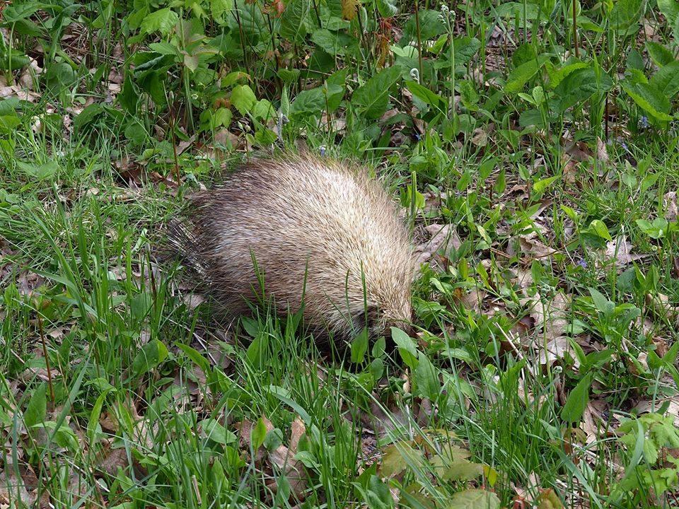 porcupine vilas county wisconsin