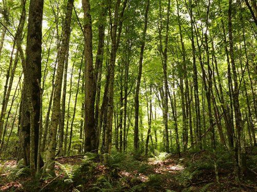 Hiking Van Vilet