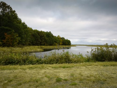 Powell Marsh Is A Populr Spot To See Birds And Wildlife In Vilas County.