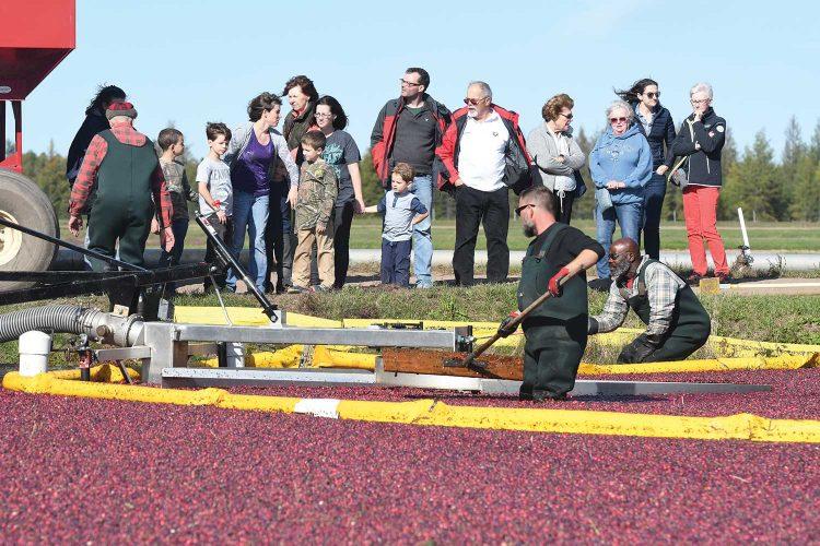 Fall Event Cranberry Harvest