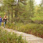 Fallison Lake Nature Trail Vilas County Wisconsin